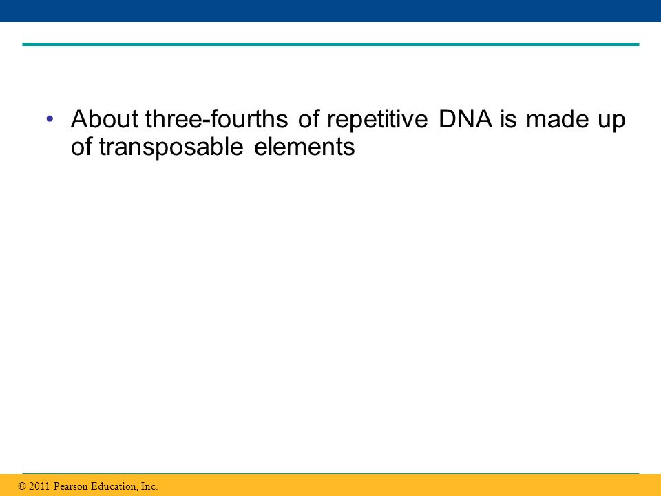 About three-fourths of repetitive DNA is made up of transposable elements