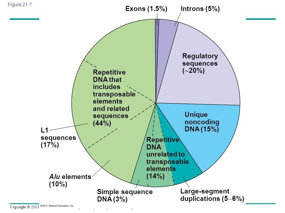 Regulatory sequences (20%)