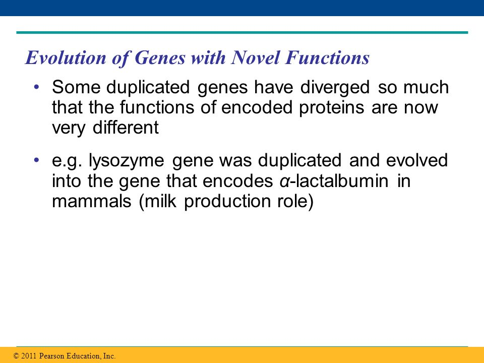 Evolution of Genes with Novel Functions
