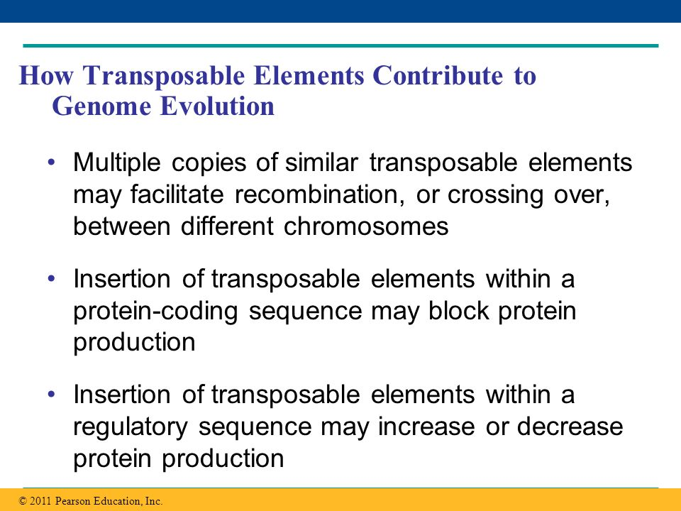 How Transposable Elements Contribute to Genome Evolution