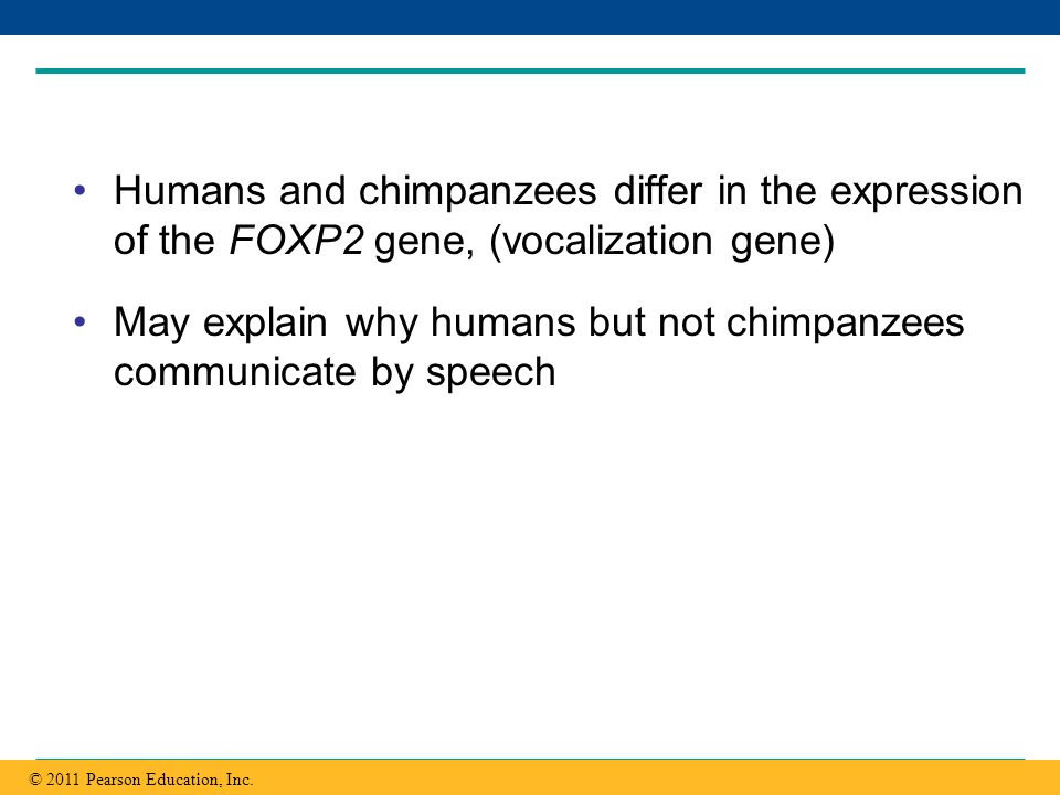 May explain why humans but not chimpanzees communicate by speech