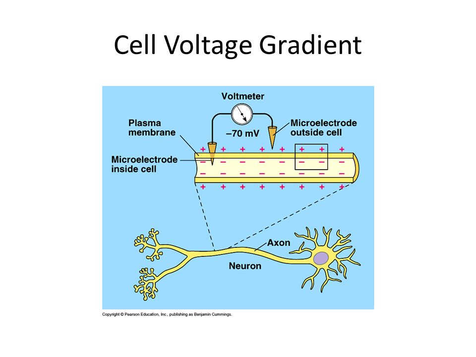 Cell Voltage Gradient