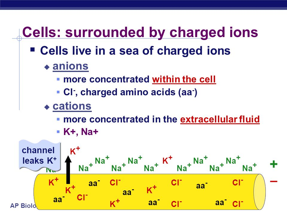 Cells: surrounded by charged ions