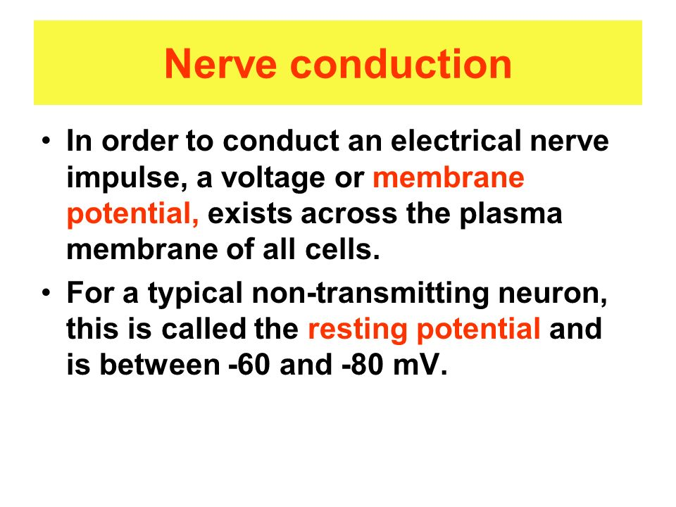 Nerve conduction In order to conduct an electrical nerve impulse, a voltage or membrane potential, exists across the plasma membrane of all cells.