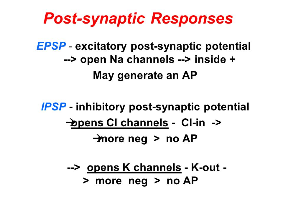 Post-synaptic Responses
