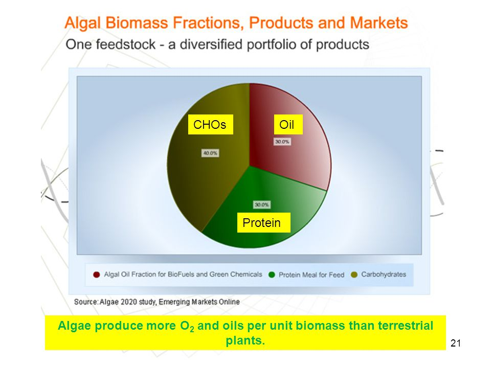 CHOs Oil Protein Algae produce more O2 and oils per unit biomass than terrestrial plants.