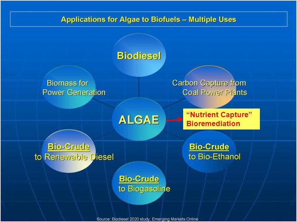 Nutrient Capture Bioremediation