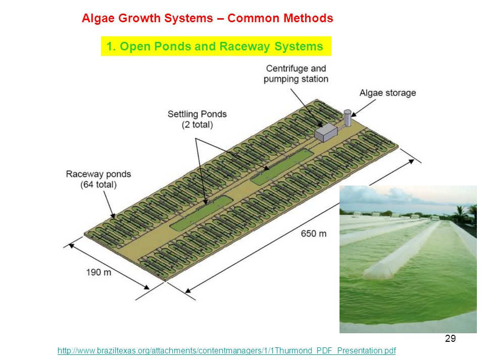 Algae Growth Systems – Common Methods
