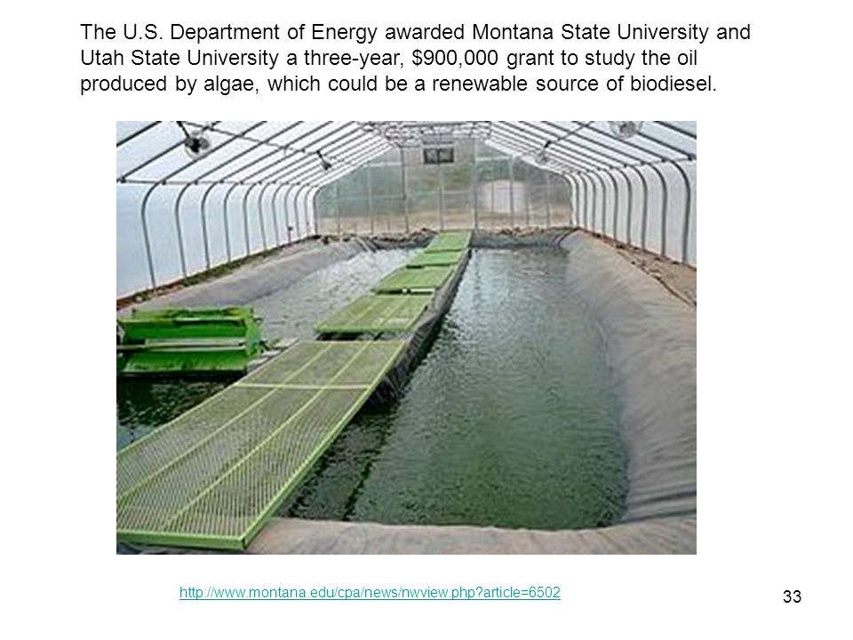 The U.S. Department of Energy awarded Montana State University and Utah State University a three-year, $900,000 grant to study the oil produced by algae, which could be a renewable source of biodiesel.