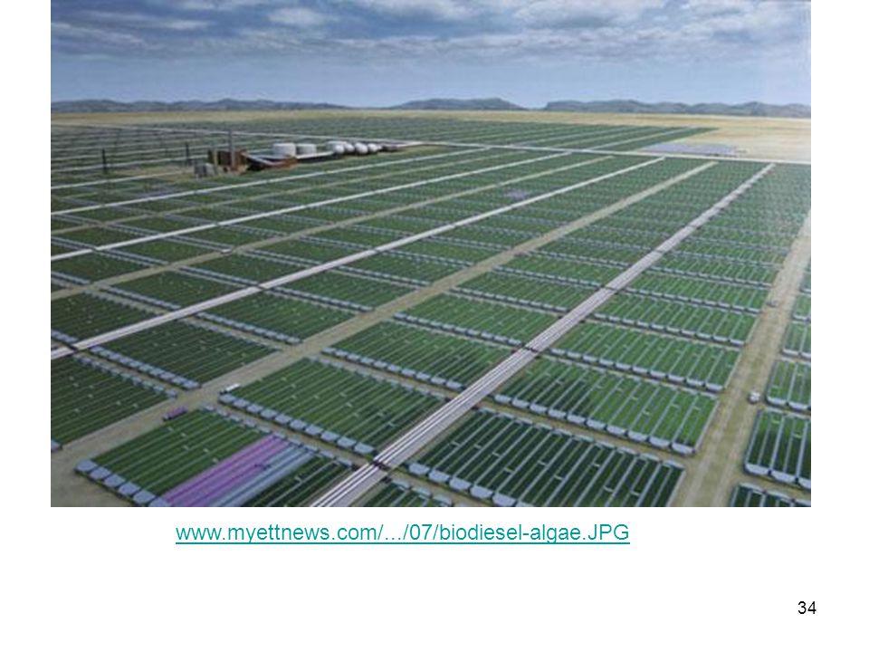www.myettnews.com/.../07/biodiesel-algae.JPG
