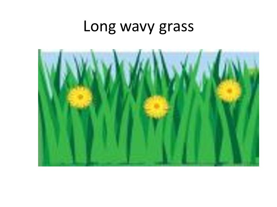 Long wavy grass