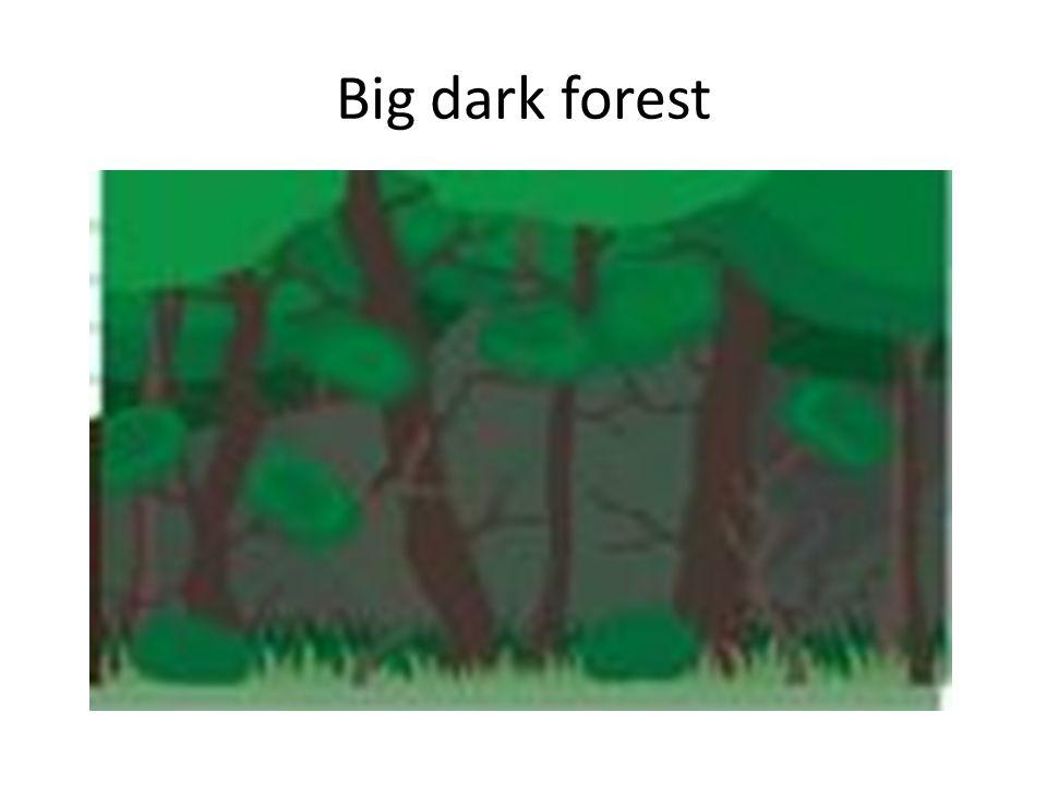 Big dark forest