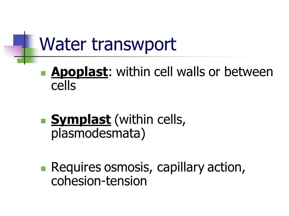 Water transwport Apoplast: within cell walls or between cells
