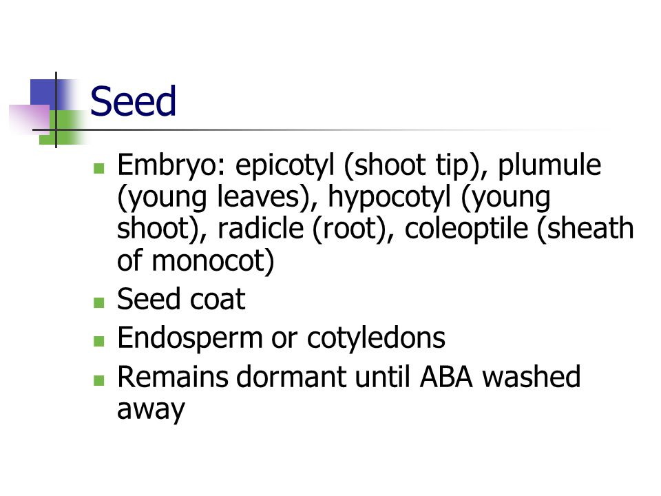 Seed Embryo: epicotyl (shoot tip), plumule (young leaves), hypocotyl (young shoot), radicle (root), coleoptile (sheath of monocot)