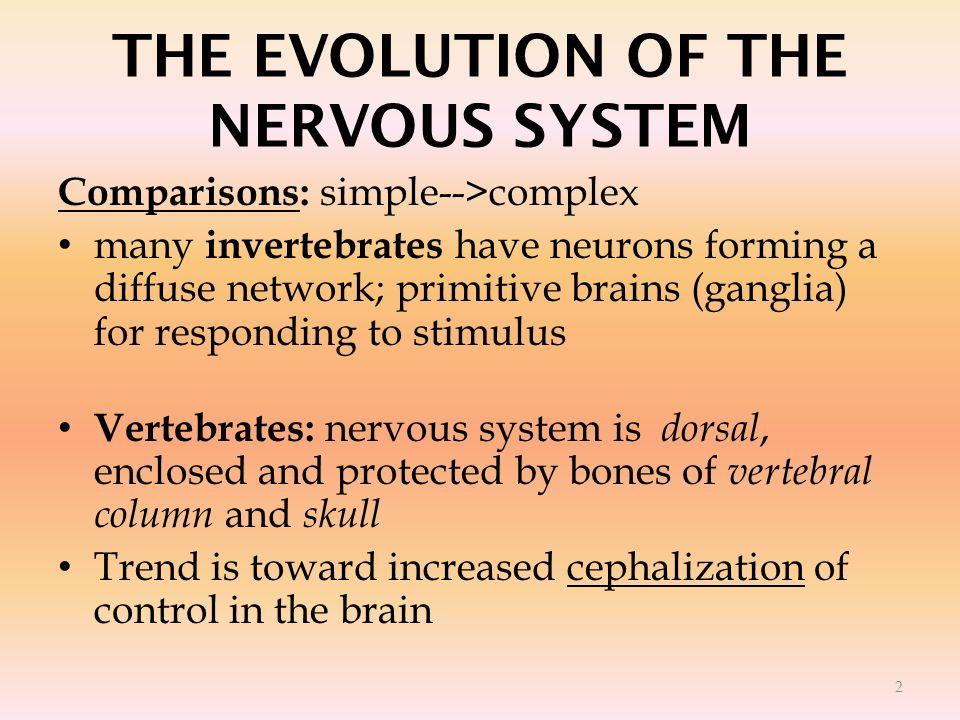 THE EVOLUTION OF THE NERVOUS SYSTEM