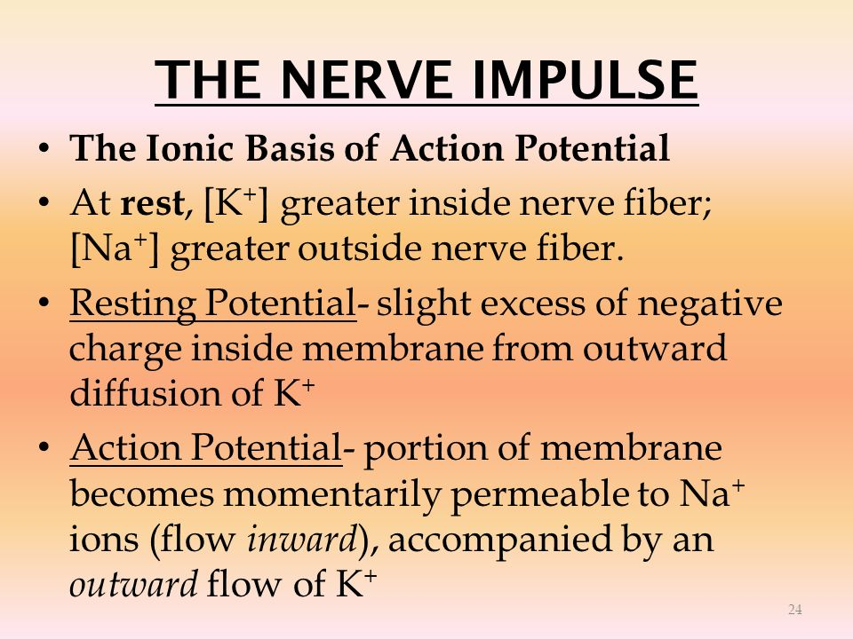 THE NERVE IMPULSE The Ionic Basis of Action Potential