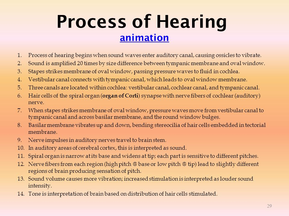 Process of Hearing animation