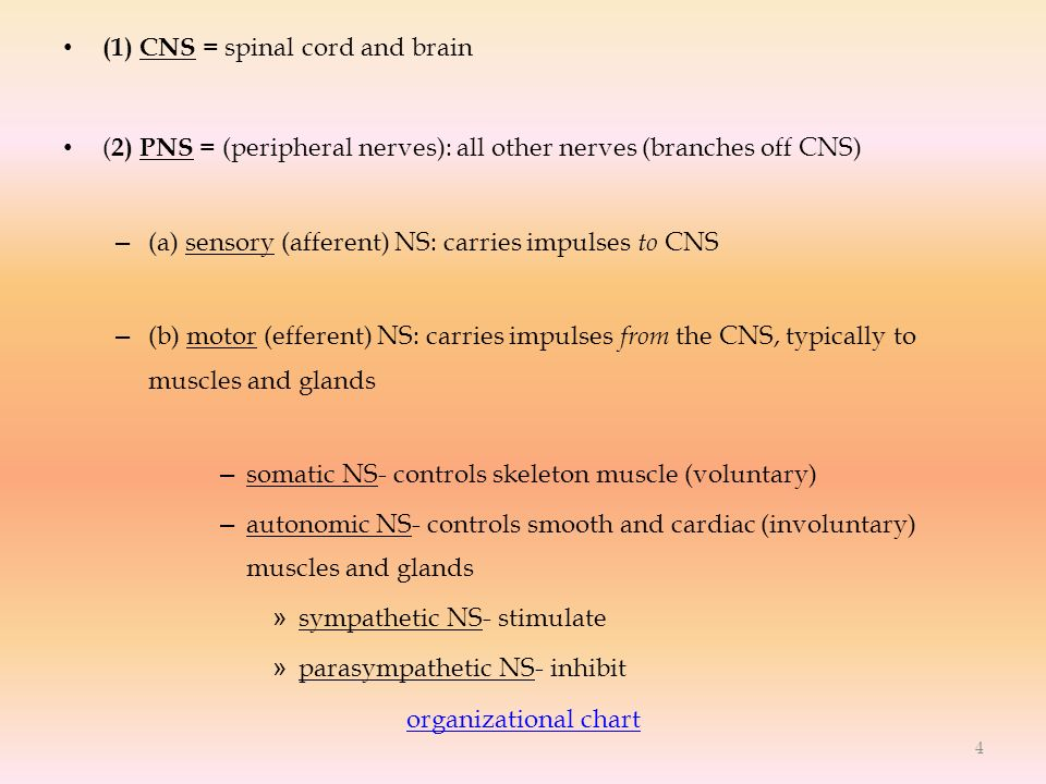 (1) CNS = spinal cord and brain