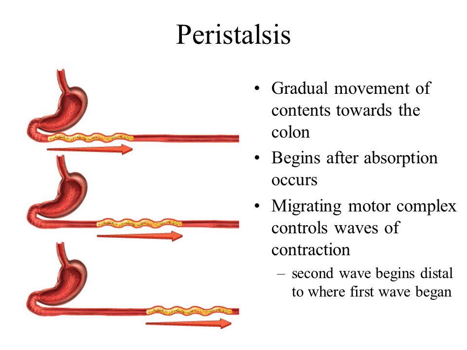 Peristalsis Gradual movement of contents towards the colon