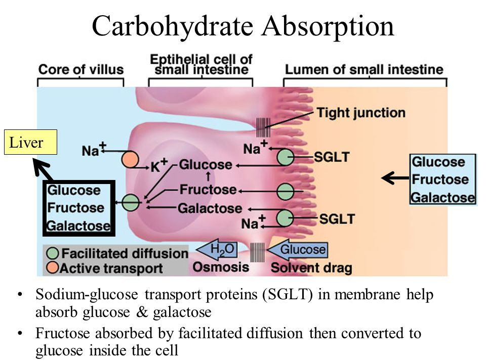 Carbohydrate Absorption