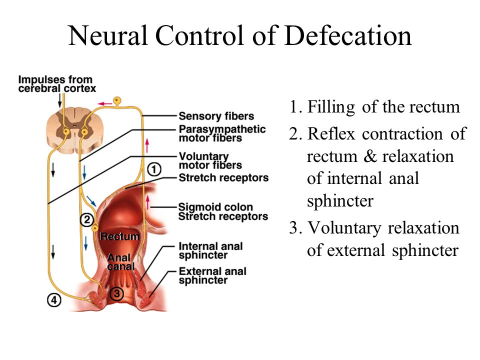 Neural Control of Defecation