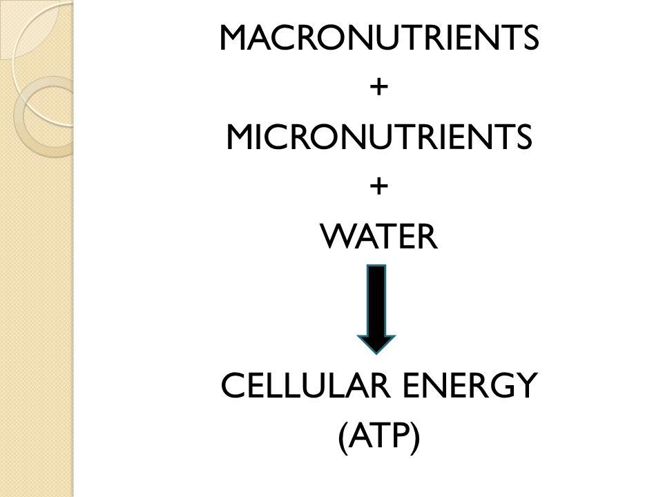 MACRONUTRIENTS + MICRONUTRIENTS WATER CELLULAR ENERGY (ATP)