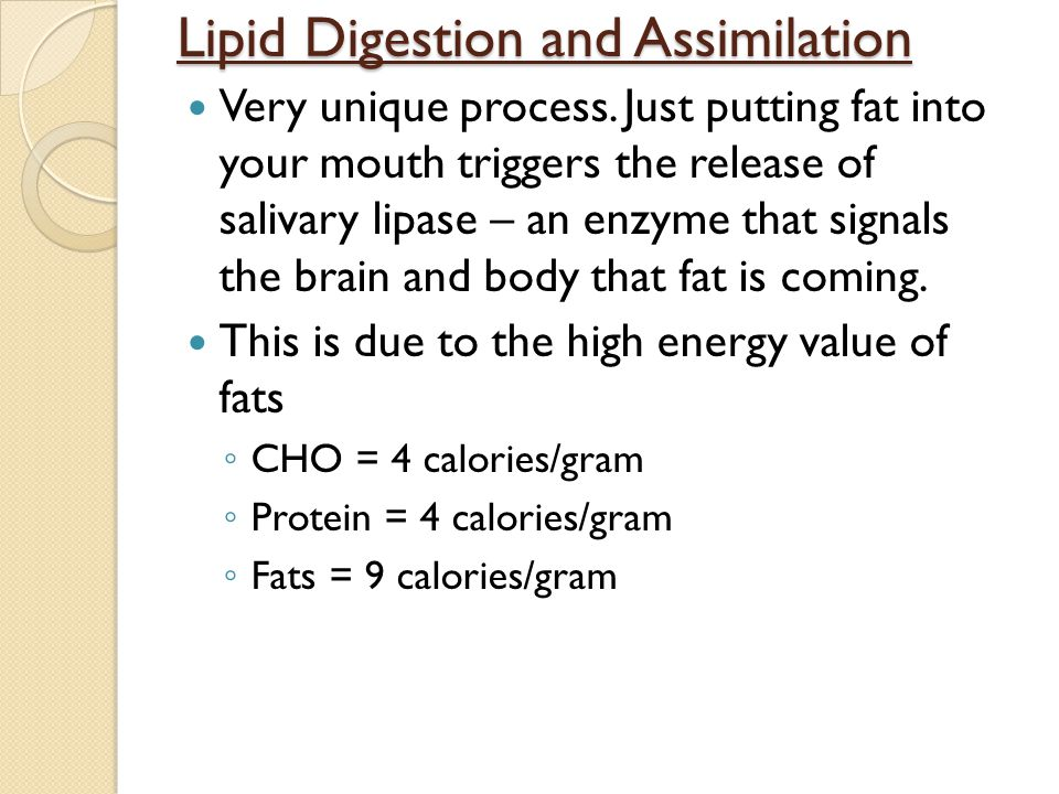 Lipid Digestion and Assimilation