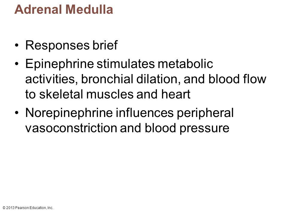 Adrenal Medulla Responses brief