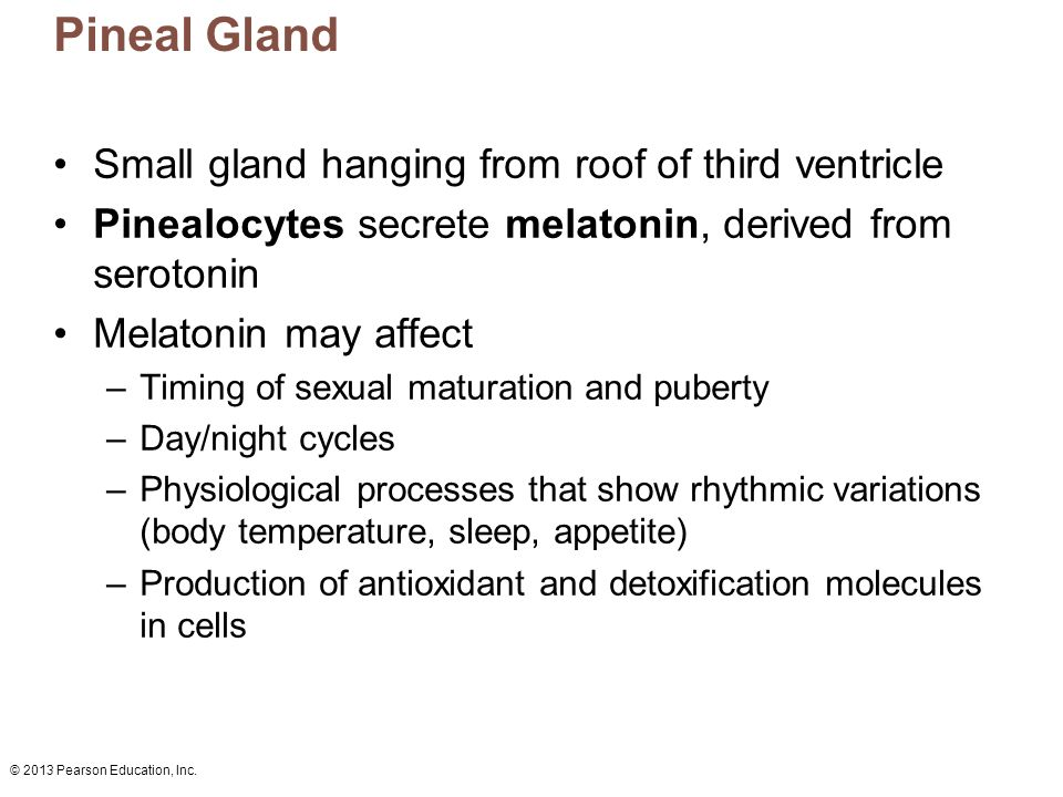 Pineal Gland Small gland hanging from roof of third ventricle