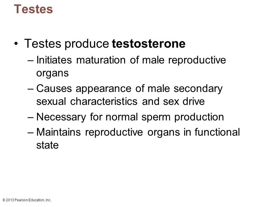 Testes produce testosterone