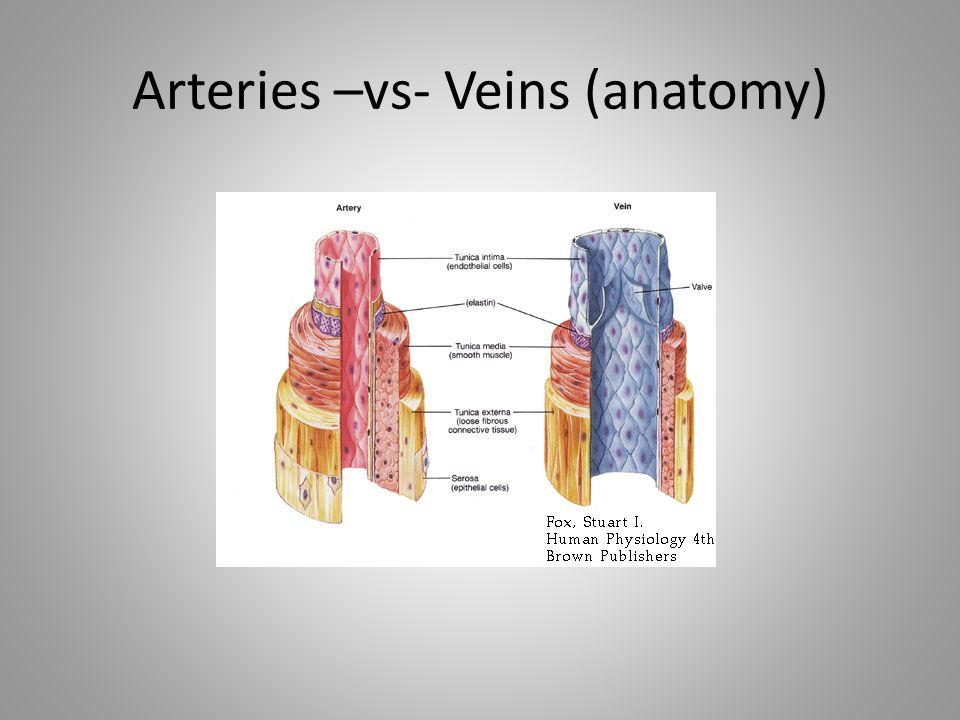 Arteries –vs- Veins (anatomy)