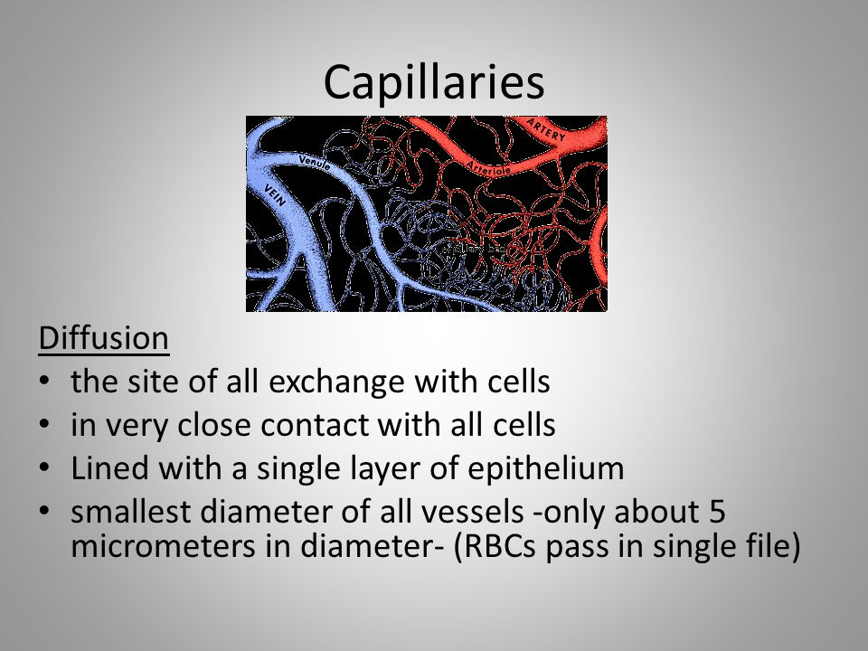Capillaries Diffusion the site of all exchange with cells