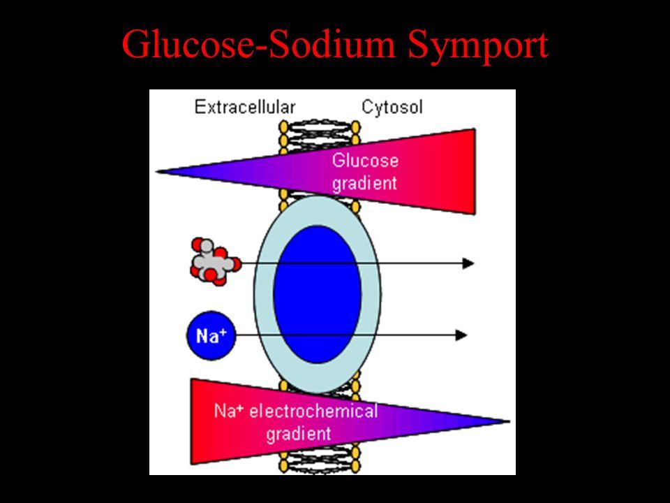 Glucose-Sodium Symport