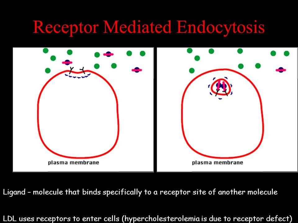 Receptor Mediated Endocytosis