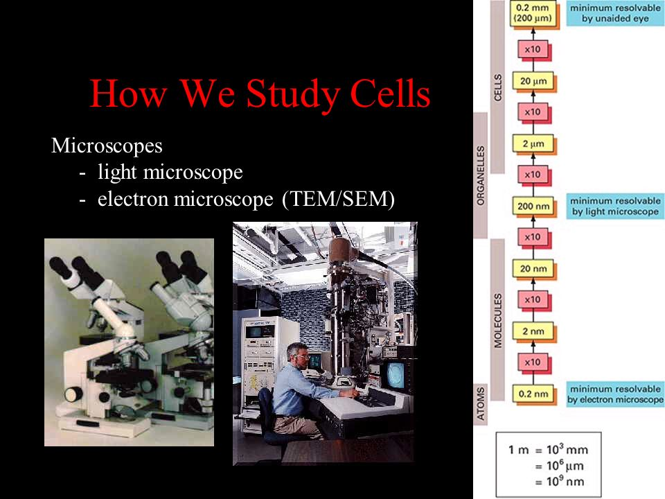 How We Study Cells Microscopes - light microscope