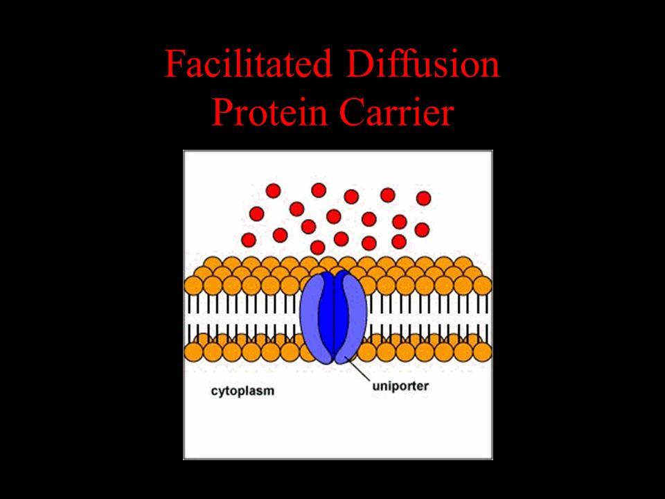 Facilitated Diffusion Protein Carrier