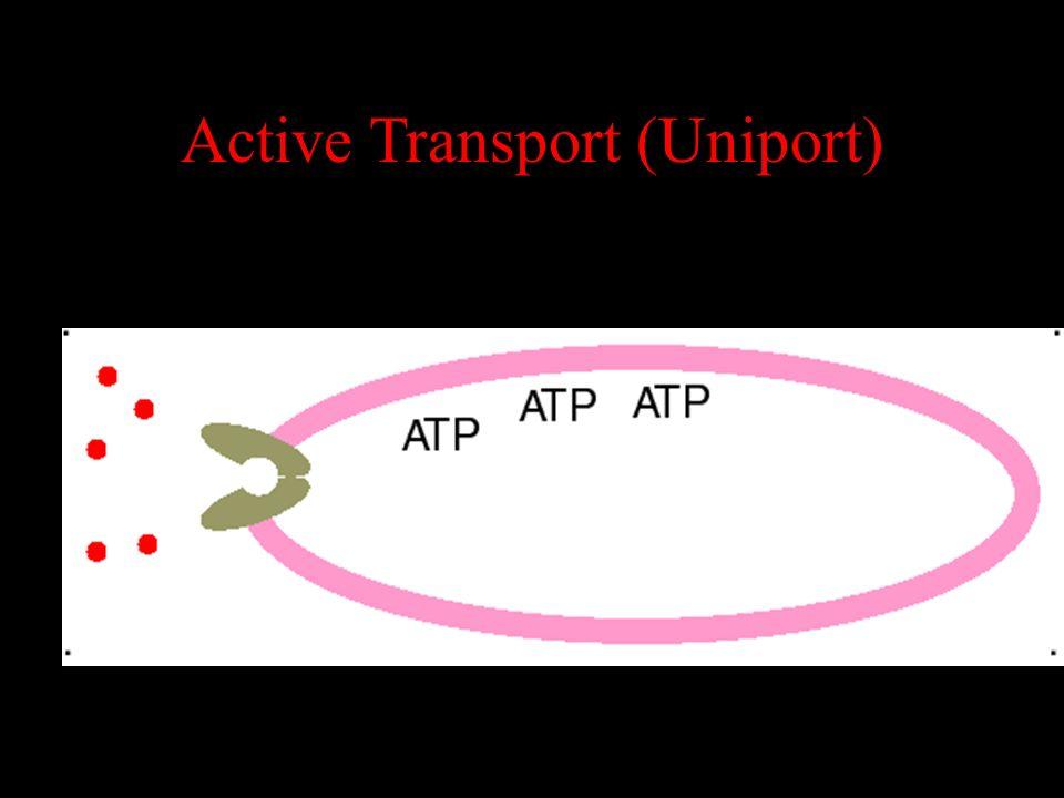Active Transport (Uniport)