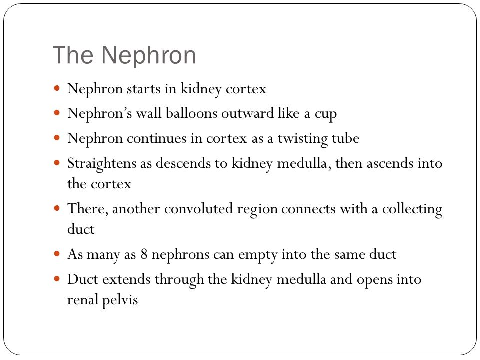 The Nephron Nephron starts in kidney cortex