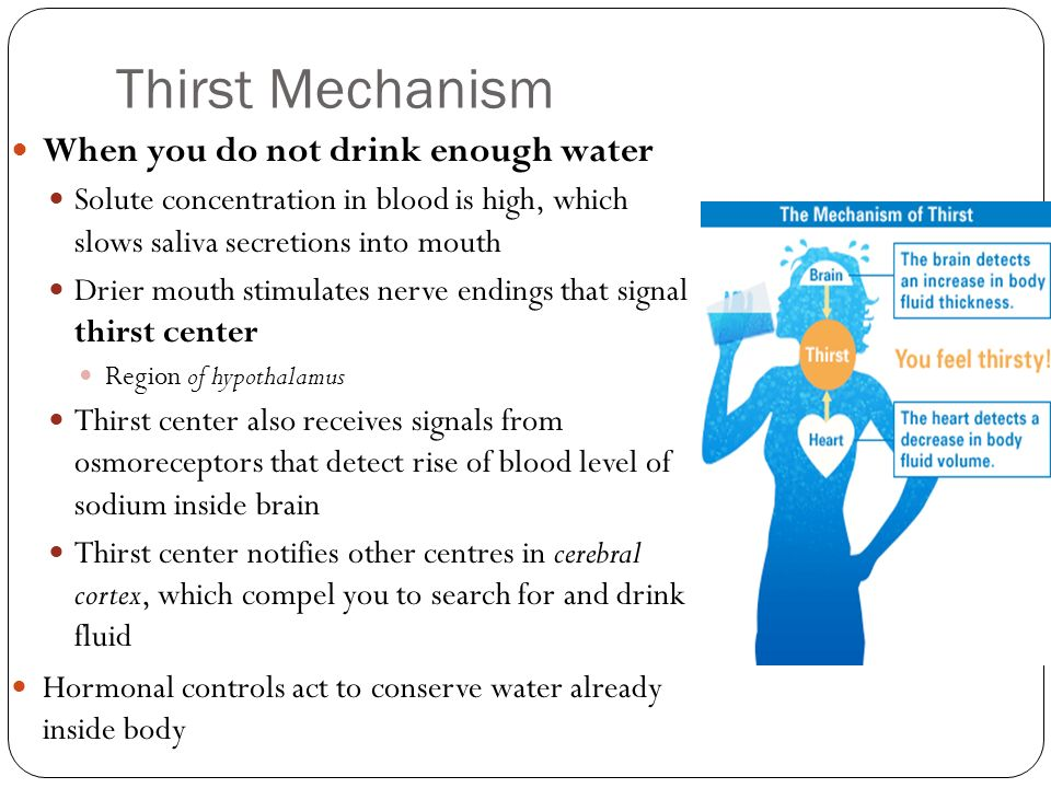 Thirst Mechanism When you do not drink enough water