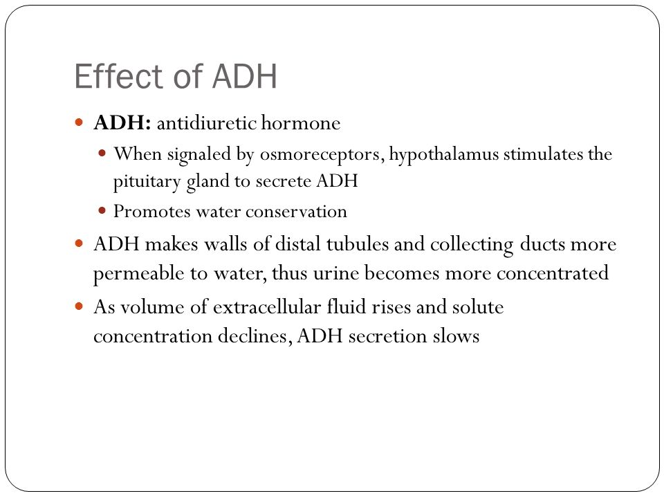 Effect of ADH ADH: antidiuretic hormone