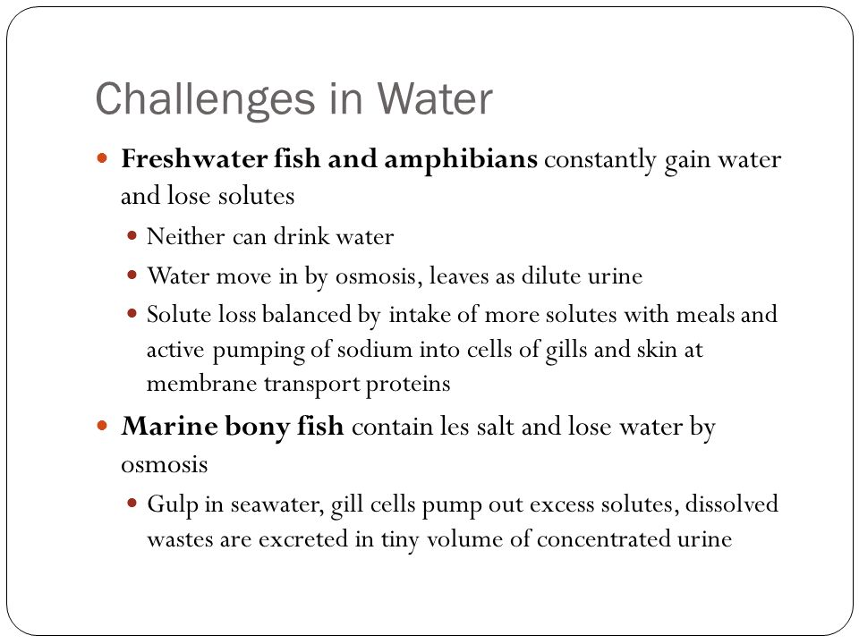 Challenges in Water Freshwater fish and amphibians constantly gain water and lose solutes. Neither can drink water.