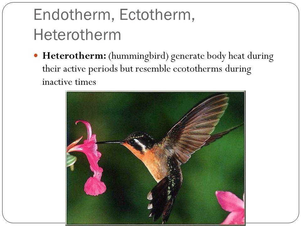 Endotherm, Ectotherm, Heterotherm