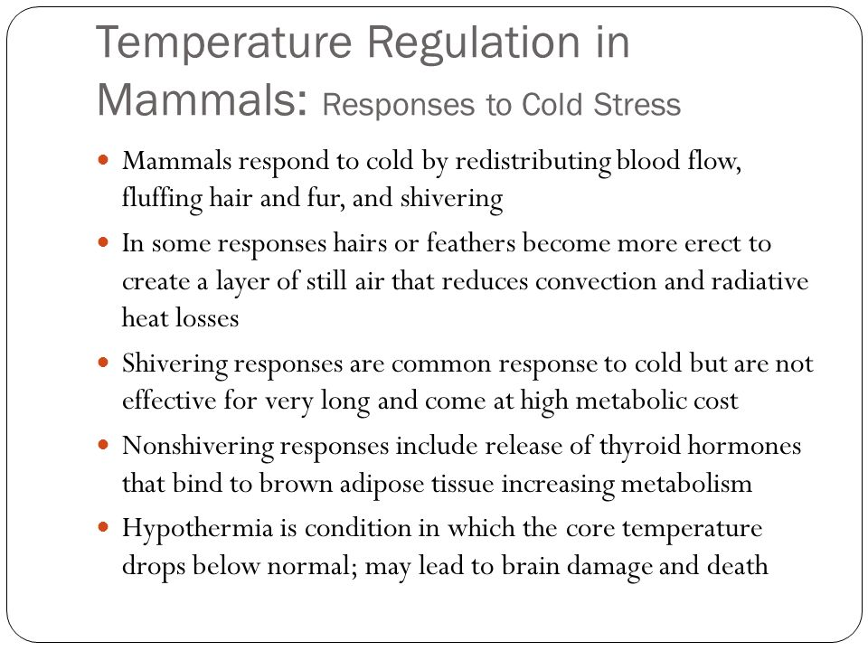 Temperature Regulation in Mammals: Responses to Cold Stress