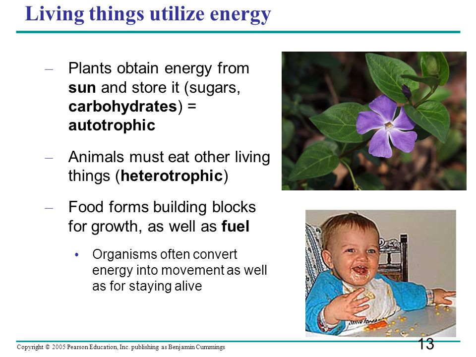 Living things utilize energy
