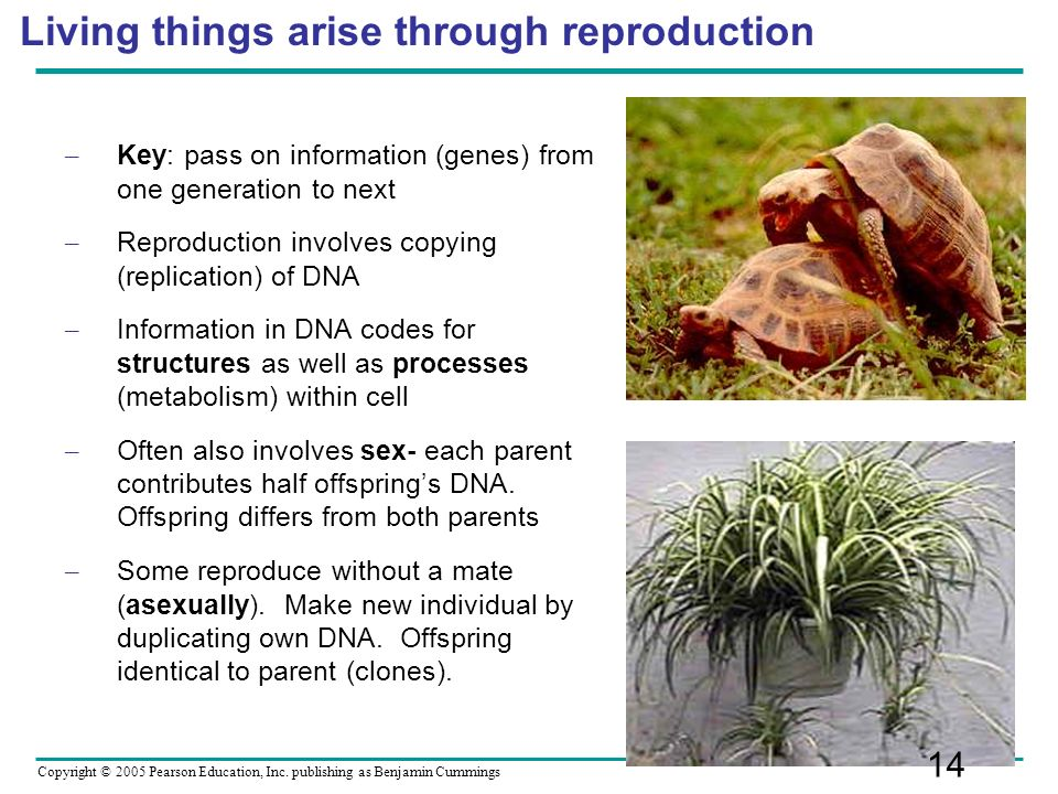 Living things arise through reproduction