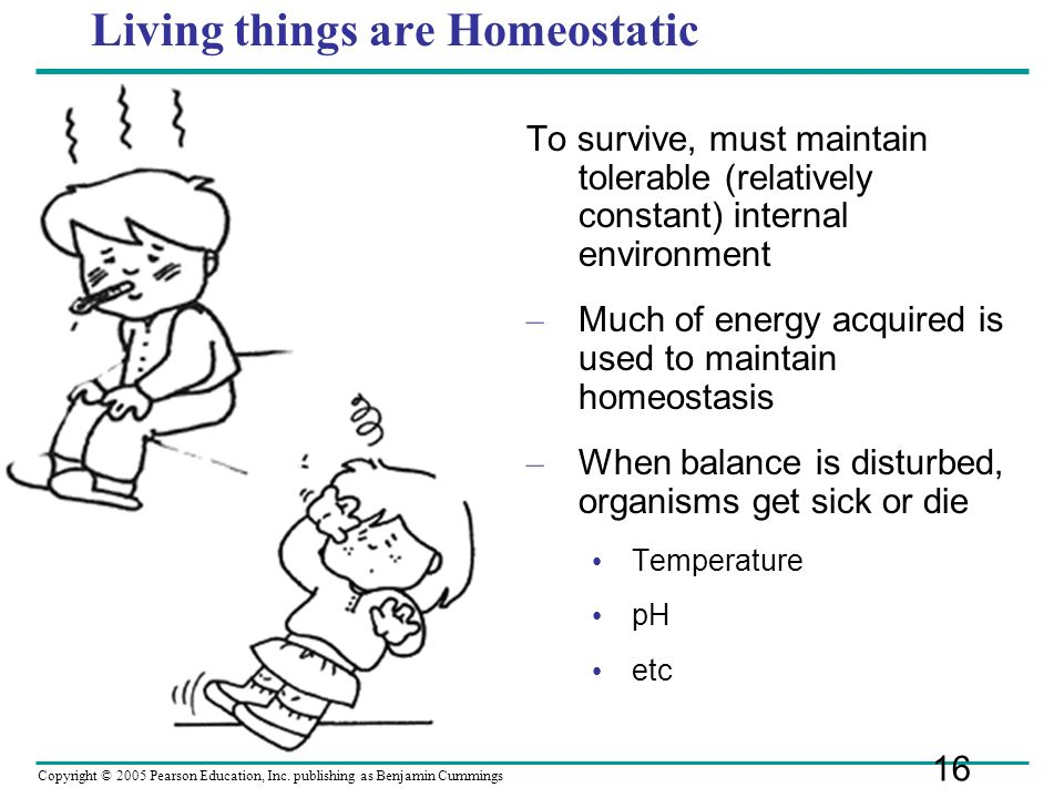 Living things are Homeostatic