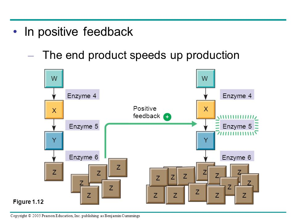 In positive feedback The end product speeds up production W Enzyme 4