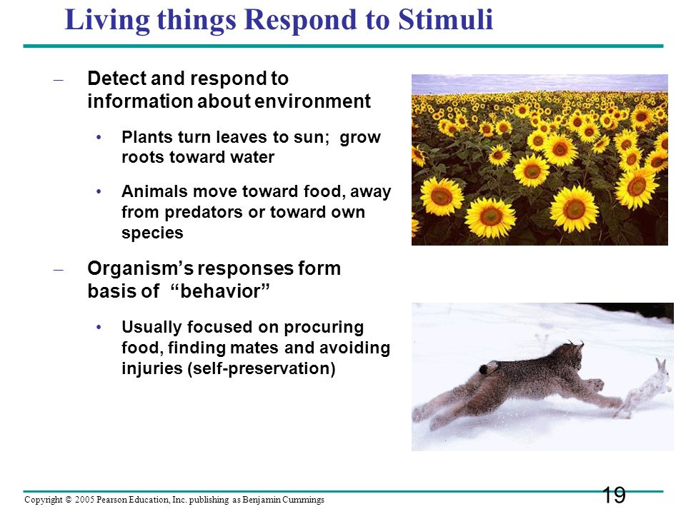 Living things Respond to Stimuli