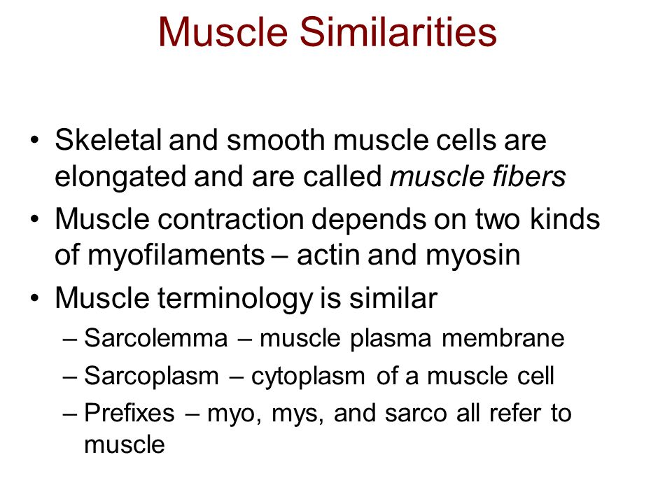 Muscle Similarities Skeletal and smooth muscle cells are elongated and are called muscle fibers.