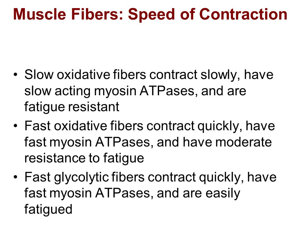 Muscle Fibers: Speed of Contraction